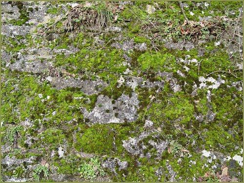 Mousses des murs et rochers for Enlever la mousse sur les murs